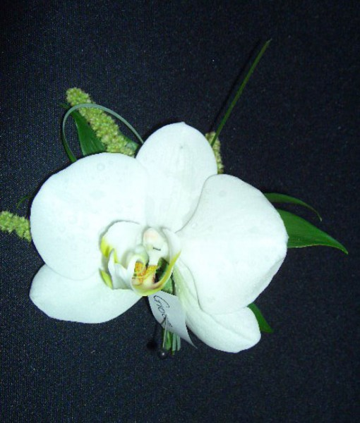 ORCHID-BOUT-2.jpg